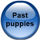 Past puppies